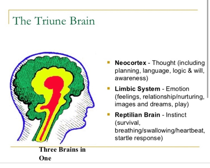 Image result for triune brain'